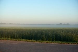 Morgennebel in der Prärie. Nähe Gladstone, Manitoba