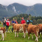 selbst die Kühe staunen (c) David Pasek